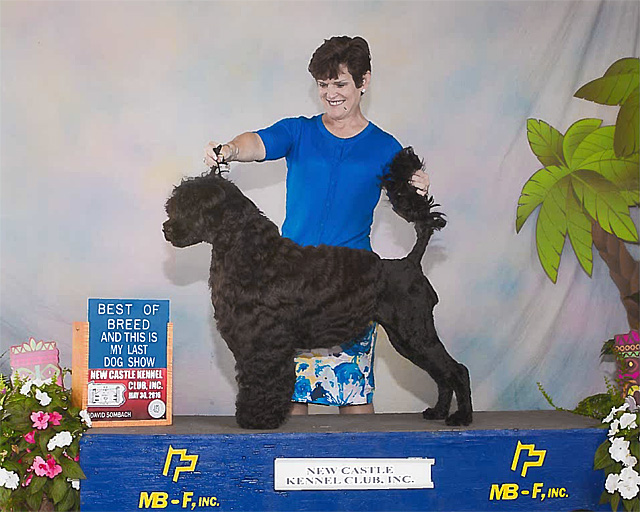 Chyna goes Best of Breed at New Castle