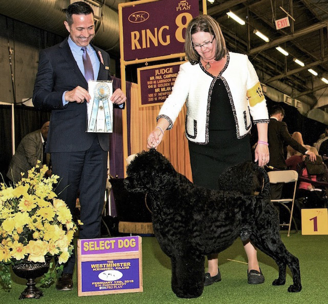 Milan judging at Westminster